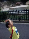 上野動物園サイのマネ.jpg