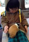 井の頭動物公園モルモット.jpg